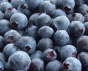 Blueberries are in season